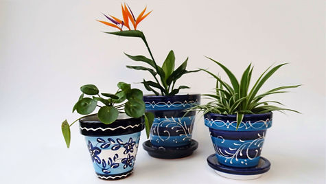 Gekleurde Terracotta bloempotten