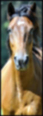 Centre equestre Fonsorbes