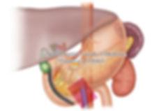 digestive_organ_01.jpg