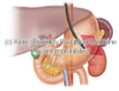 digestive_organ_02.jpg