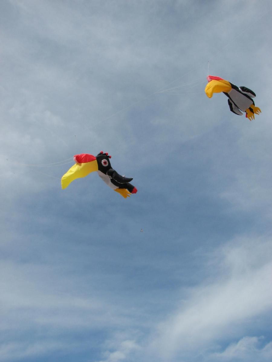 1200_cerfs-volants_IMG_1173