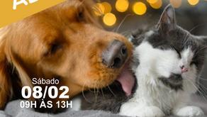 6° Evento de Adoção Zoonoses DF 2020