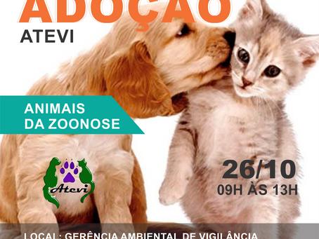 26/10 - 4° Evento de Adoção da Zoonoses DF 2019