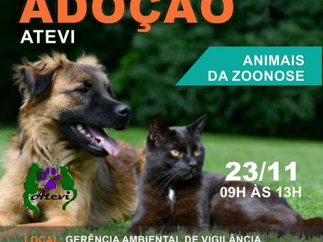 23/11 - 5° Evento de Adoção da Zoonoses DF 2019