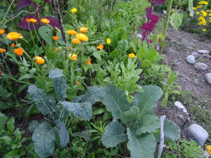 Waldgarten mit verschiedenen Pflanzen - Nutzpflanzen wachsen in Harmonie mit der Natur.