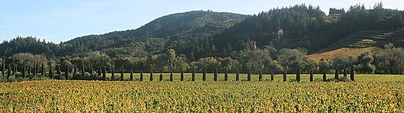 vineyard banner.jpg