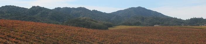 red vines banner.jpg