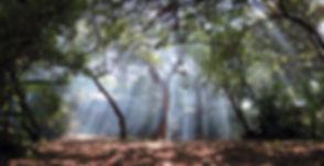 Mal 1_edited.jpg