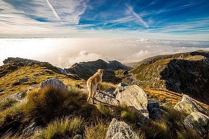 hond bergen.jpg