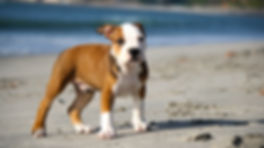puppy-345334_1920.jpg