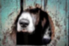 animals-2607753_1920.jpg
