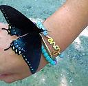 Butterfly & Love by Caroline Starnes.jpg
