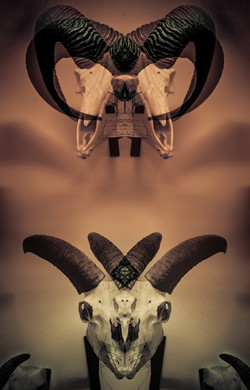 Bestiaire VII