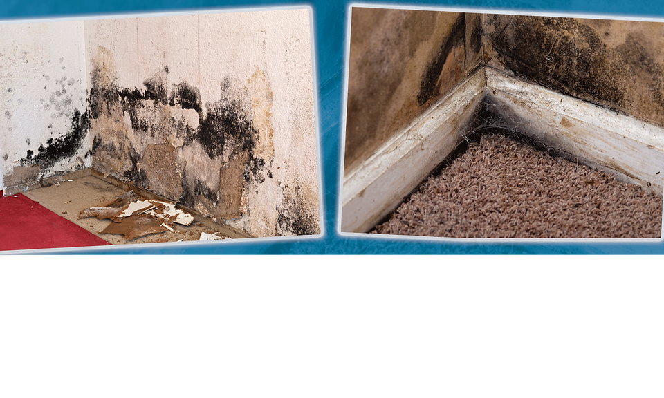 mold removal remediato