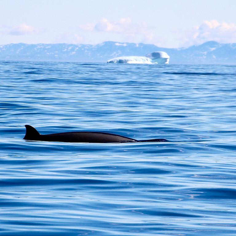 Wild Seas to Greenland by Rebecca Hayter