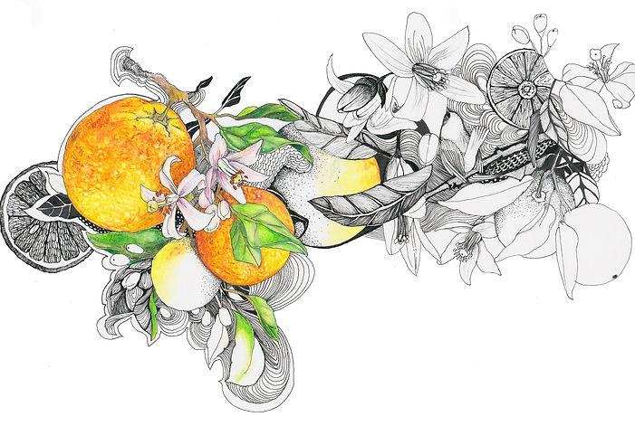 pomerance3.jpg