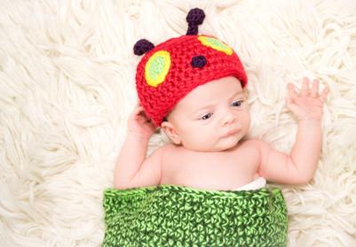 newborn ladybug