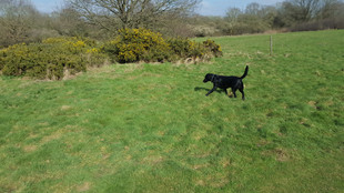 The daily dog walk