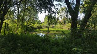 The pond..