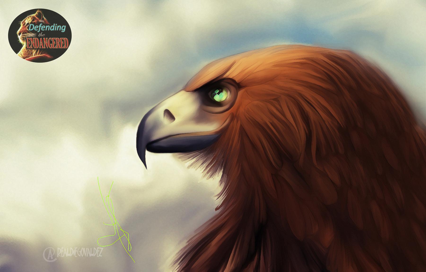 Mountain Eagle - Diego Valdez