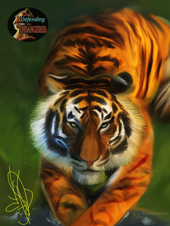 OCTOBER TIGER