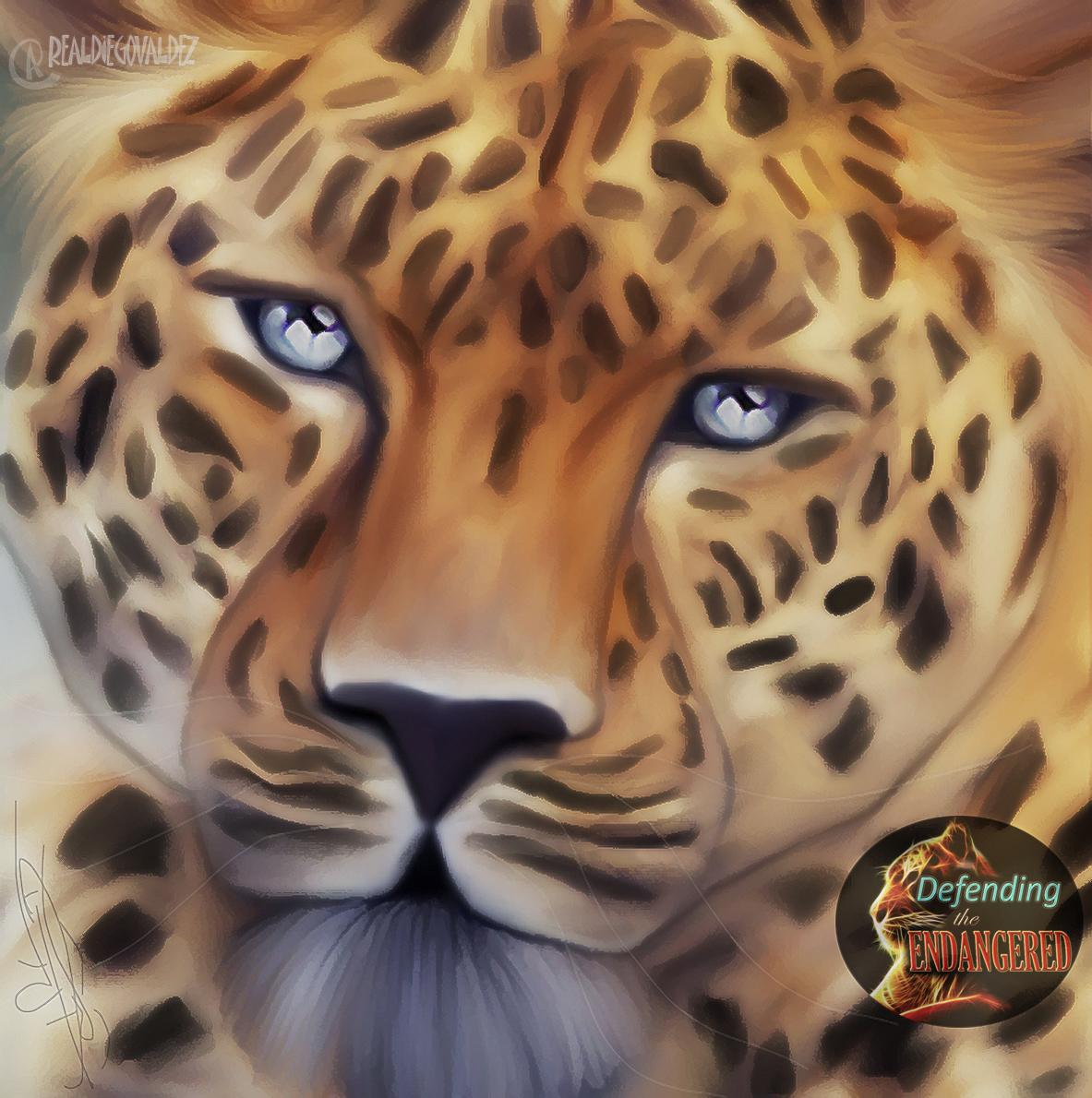 Leopard 1 - Diego Valdez