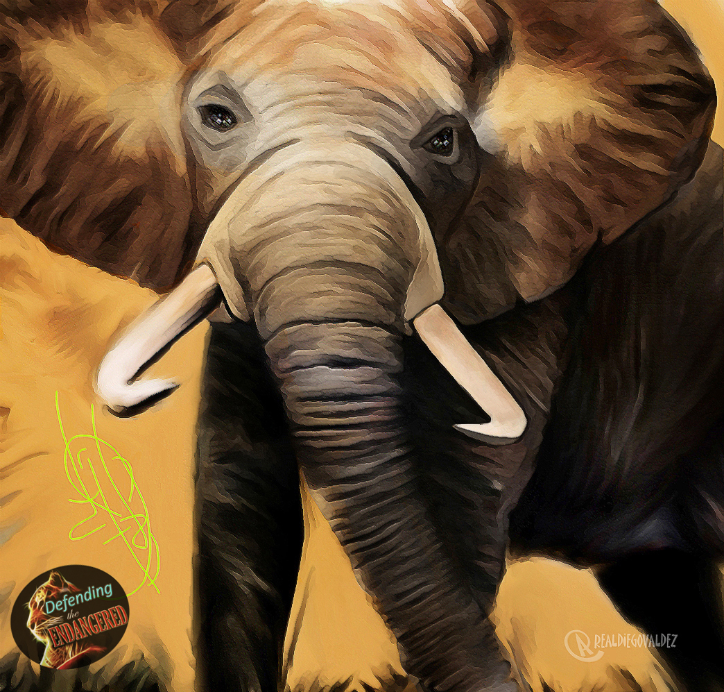 Elephant 2018