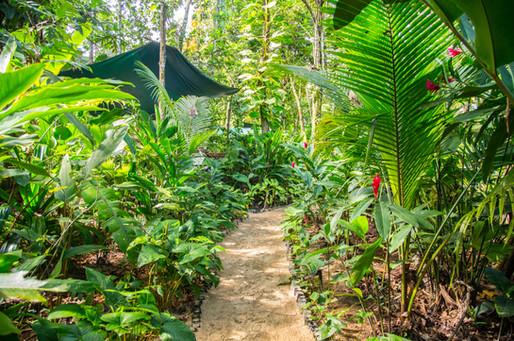Path at Palmar Beach Lodge