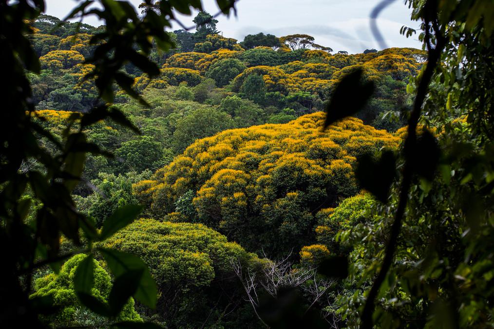 jungleinbloom.jpg