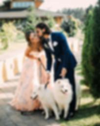 собаки на свадьбу