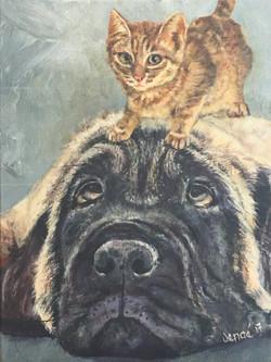 Pets-Mastiff-Kitty
