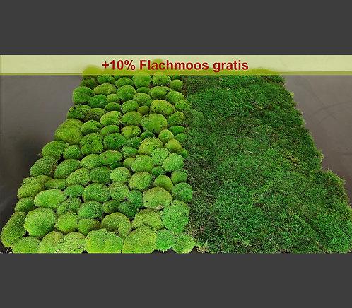 Moos gemischt 0,5 - 1 m²