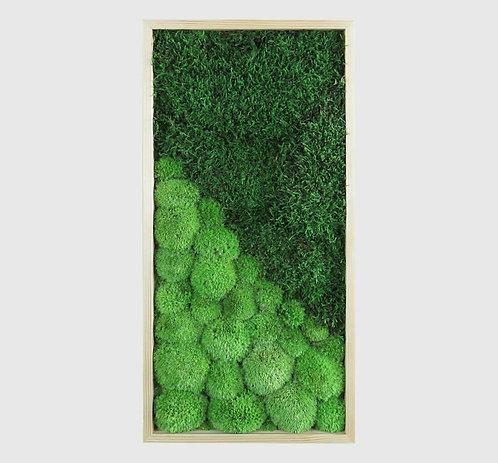 Moosbild 60x30 cm