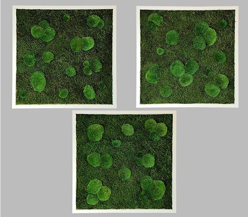 3 Moosbilder 60x60cm