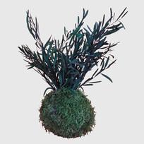 Kokedama 10 cm konservierter Eukalyptus
