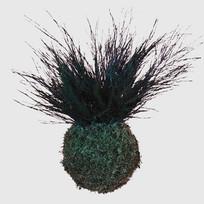 Kokedama 14 cm Baumfarn konserviert