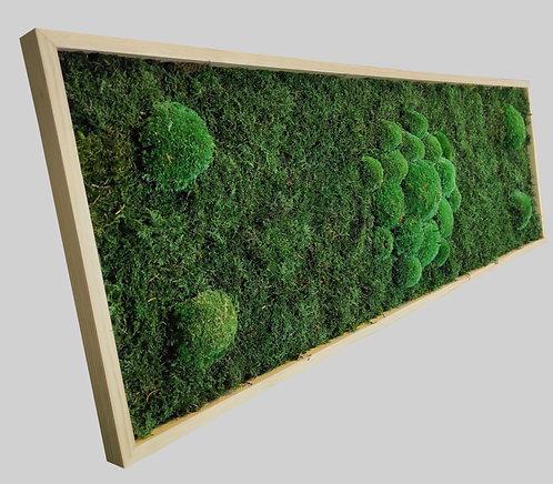 Moosbild 100x35 cm