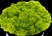 Limettengrün