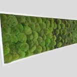 Moosbild Verlauf 150x50 cm