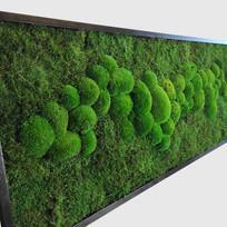 Moosbild 100x40 cm