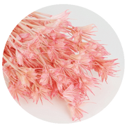 Nigella orientalis