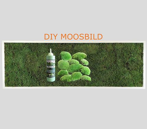 DIY - Moosbild
