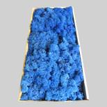 Islandmoos königsblau
