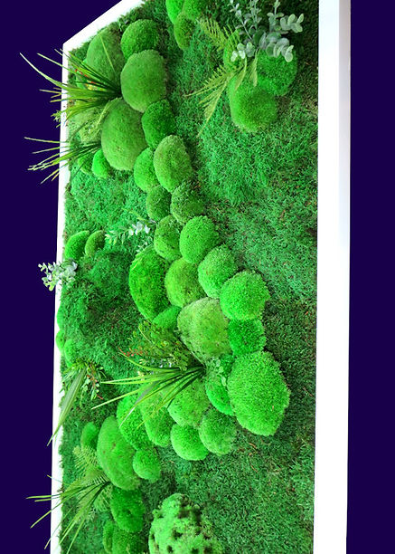 Moosbild Pflanzenbild