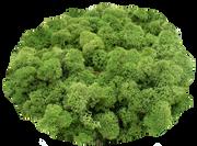 Mittel-grün