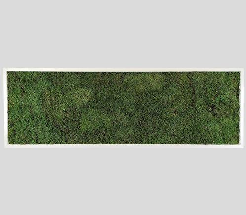 Moosbild 150x50 cm