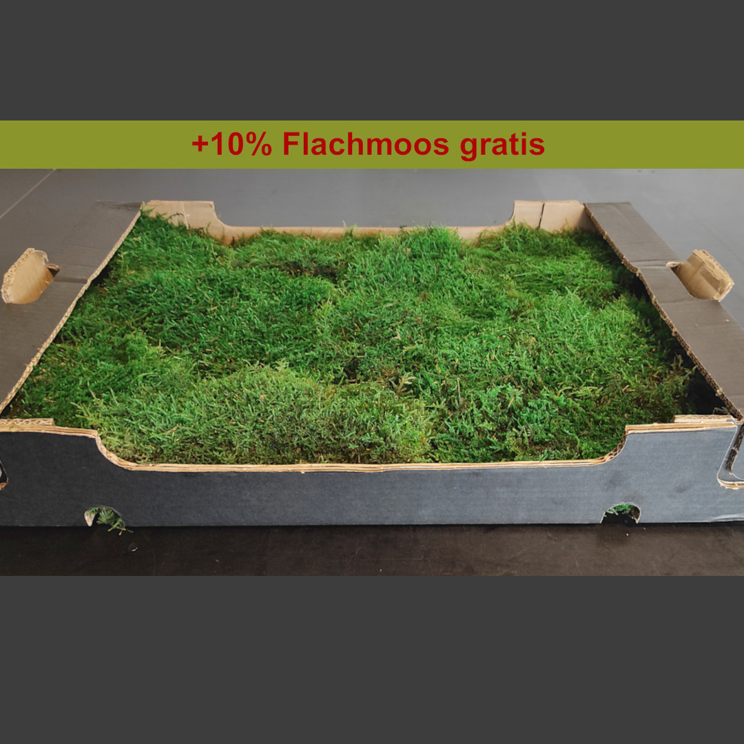 Konserviertes Flachmoos