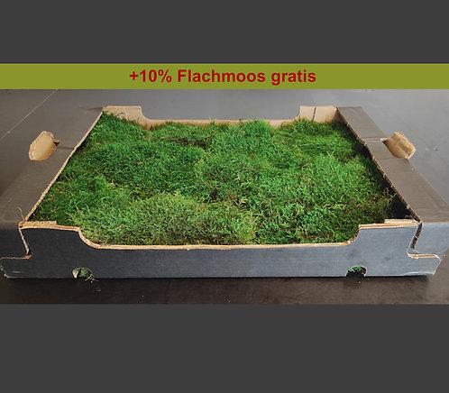 Flachmoos 0,5 - 1 m²