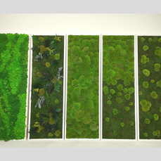 Moosbilder 150x50 cm Islandmoosbild, Dsc