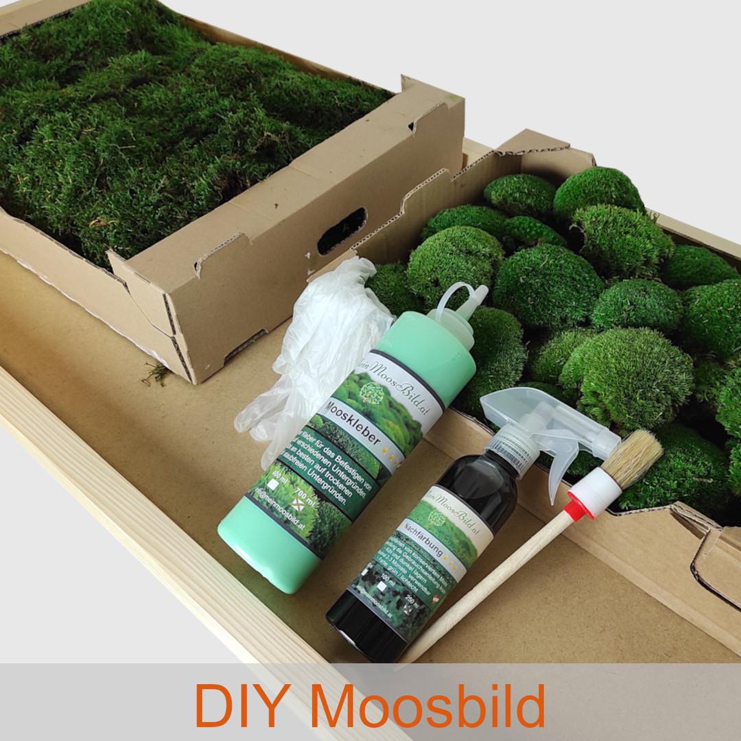 DIY Moosbild